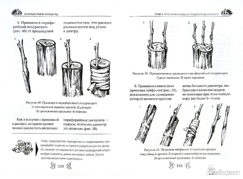 Иллюстрация 1 из 9 для Отличный урожай круглый год - Галина Серикова | Лабиринт - книги. Источник: Лабиринт
