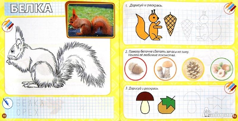Иллюстрация 1 из 5 для Лесные животные и растения   Лабиринт - книги. Источник: Лабиринт