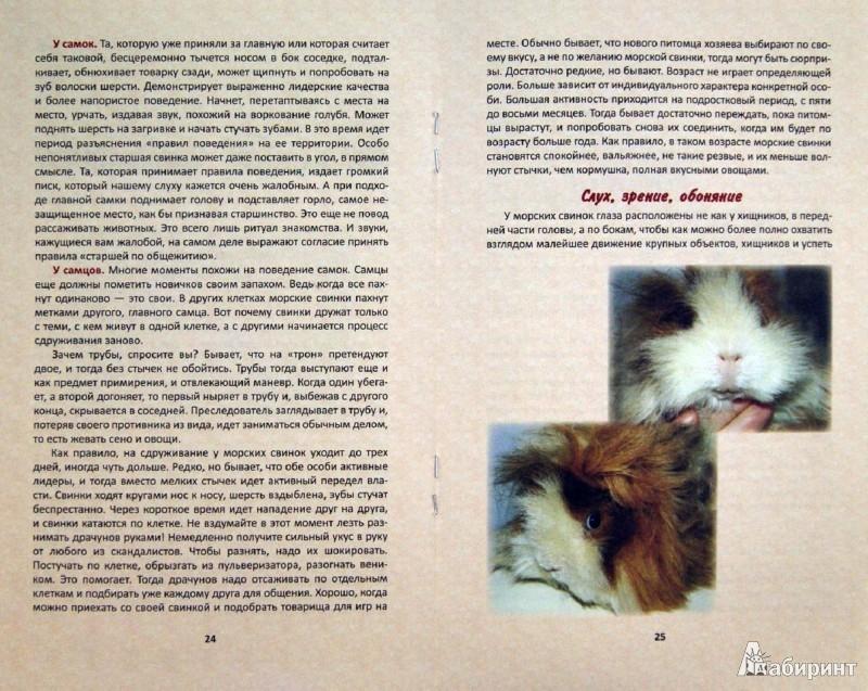 Иллюстрация 1 из 11 для Морские свинки: правила ухода - Прокофьева, Трестьян | Лабиринт - книги. Источник: Лабиринт