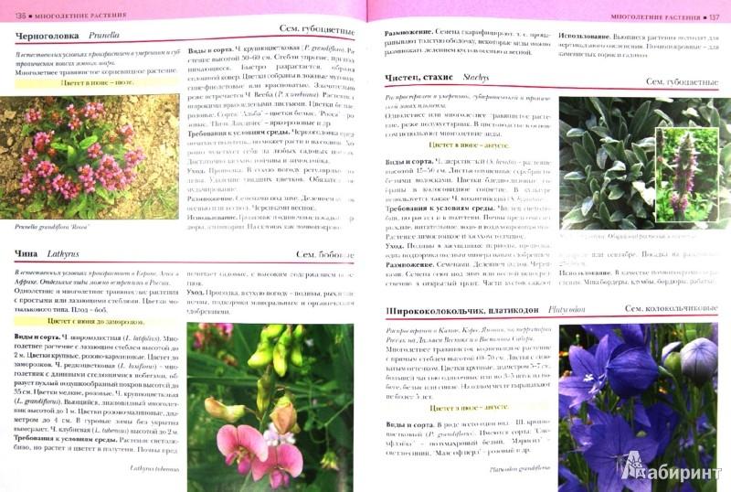 Иллюстрация 1 из 30 для Садовые растения от А до Я - Валентин Воронцов   Лабиринт - книги. Источник: Лабиринт
