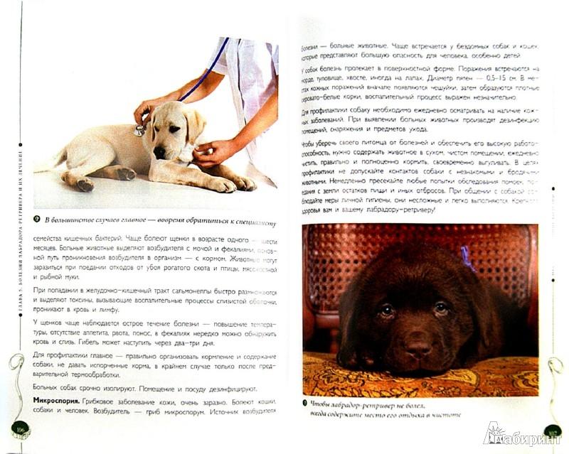 Иллюстрация 1 из 9 для Лабрадор-ретривер. Гид по породе - Андрей Шкляев | Лабиринт - книги. Источник: Лабиринт