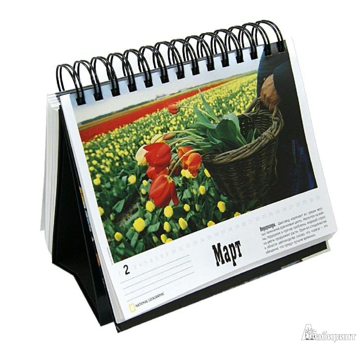 Иллюстрация 1 из 16 для National Geographic. Лучшие фотографии. Календарь 365 дней | Лабиринт - сувениры. Источник: Лабиринт