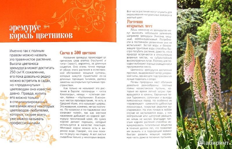 Иллюстрация 1 из 19 для Современная усадьба. Садовые великаны | Лабиринт - книги. Источник: Лабиринт