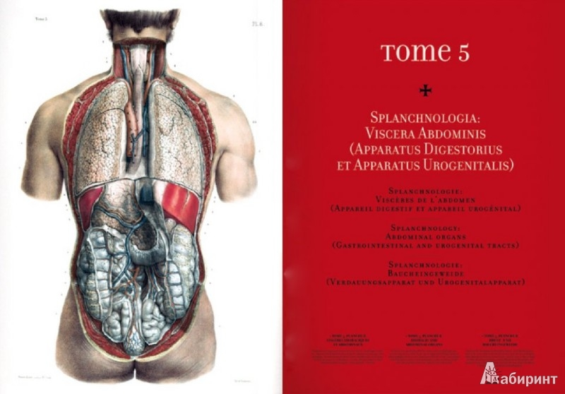 Иллюстрация 1 из 14 для Bourgery. Atlas of Human Anatomy and Surgery - Le, Sick | Лабиринт - книги. Источник: Лабиринт