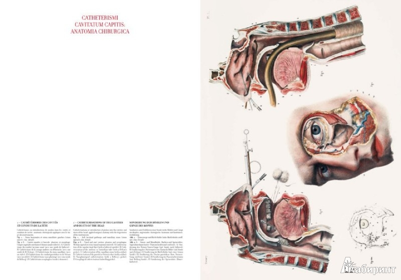 4 14 Bourgery Atlas Of Human Anatomy And Surgery