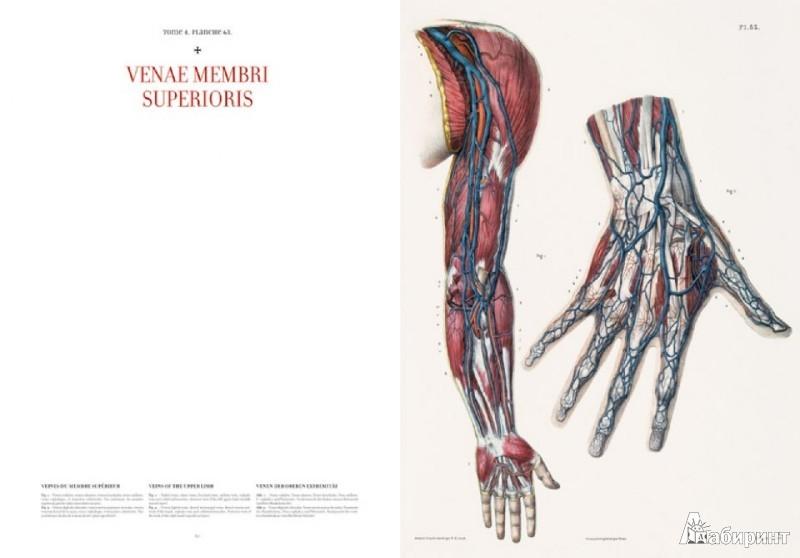 5 14 Bourgery Atlas Of Human Anatomy And Surgery