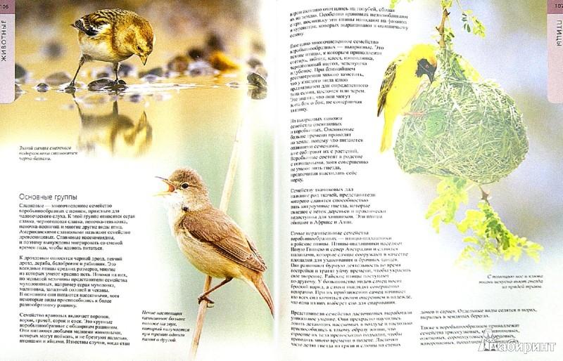 Иллюстрация 1 из 29 для Животные - Грей, Чешир, Мэттисон   Лабиринт - книги. Источник: Лабиринт