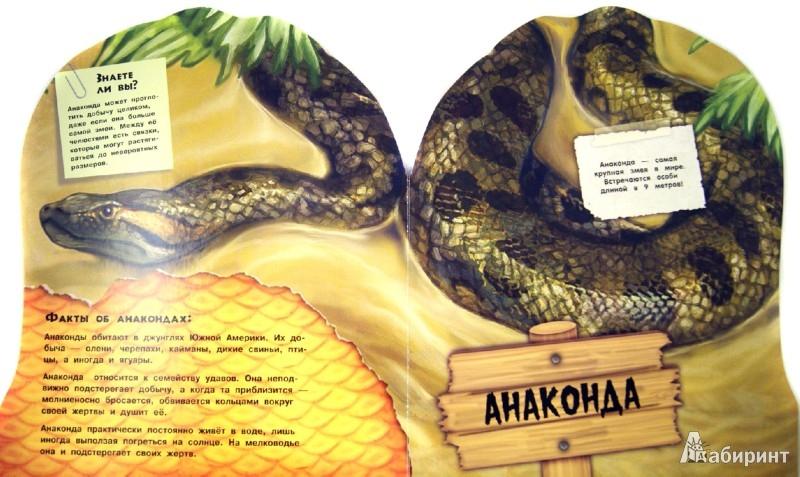 Иллюстрация 1 из 6 для Дикие животные. Загадочные змеи   Лабиринт - книги. Источник: Лабиринт