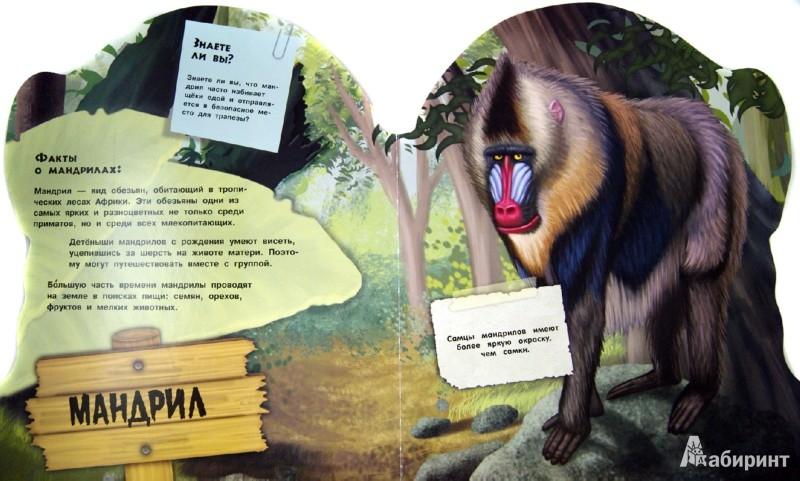 Иллюстрация 1 из 13 для Дикие животные. Умные обезьяны | Лабиринт - книги. Источник: Лабиринт