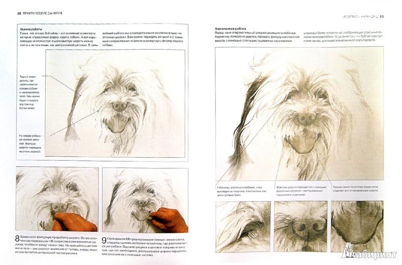 Иллюстрация 1 из 19 для Животные. От эскиза до картины - Ходжет, Трусс | Лабиринт - книги. Источник: Лабиринт