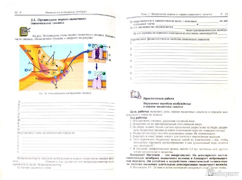 Иллюстрация 1 из 16 для Физиология возбудимых мембран. Учебное пособие и практикум для медицинских вызов - Ерофеев, Захарова, Парийская | Лабиринт - книги. Источник: Лабиринт