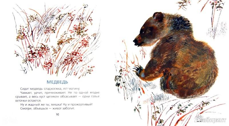 Иллюстрация 1 из 25 для В лесу - Евгений Чарушин   Лабиринт - книги. Источник: Лабиринт