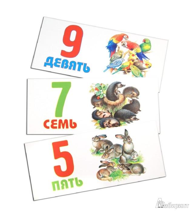 Иллюстрация 1 из 13 для Цифры, формы и цвета. Набор карточек в коробочке | Лабиринт - книги. Источник: Лабиринт