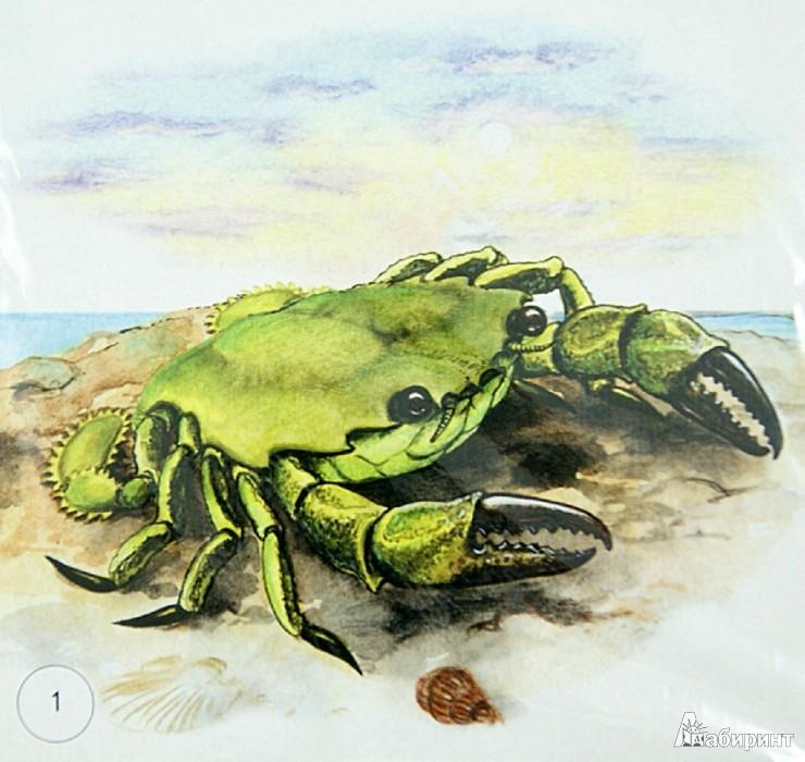 """Иллюстрация 1 из 4 для Карточки """"Морские животные""""   Лабиринт - книги. Источник: Лабиринт"""