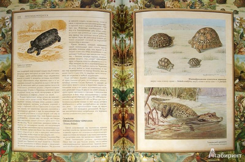 Иллюстрация 1 из 23 для Жизнь животных - Альфред Брем | Лабиринт - книги. Источник: Лабиринт