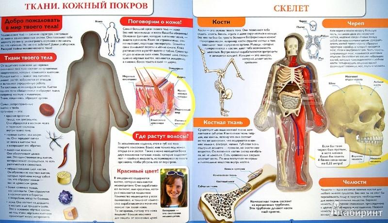 Иллюстрация 1 из 11 для Человек. Путеводитель по телу человека 3D - Luann Colombo | Лабиринт - книги. Источник: Лабиринт