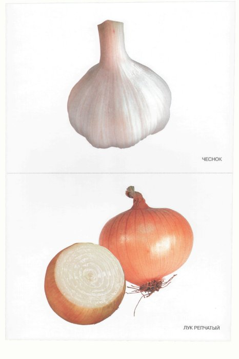 Иллюстрация 1 из 4 для Мир в картинках: Овощи. 3-7 лет   Лабиринт - книги. Источник: Лабиринт
