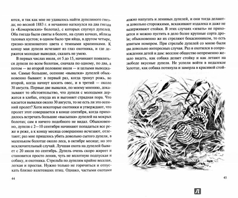 Иллюстрация 1 из 5 для Охота в болоте - Анатолий Савельев   Лабиринт - книги. Источник: Лабиринт