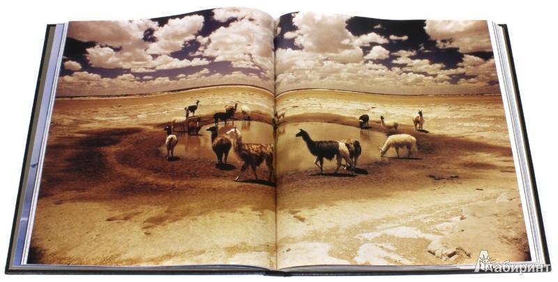 Иллюстрация 1 из 14 для Уникальные фотографии живой природы - Джон Митчелл | Лабиринт - книги. Источник: Лабиринт