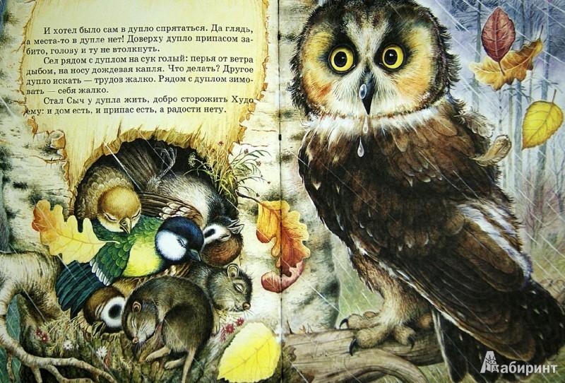 Иллюстрация 1 из 9 для Лесные сказки - Николай Сладков | Лабиринт - книги. Источник: Лабиринт