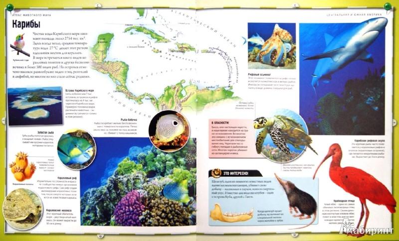 Иллюстрация 1 из 11 для Атлас животного мира | Лабиринт - книги. Источник: Лабиринт