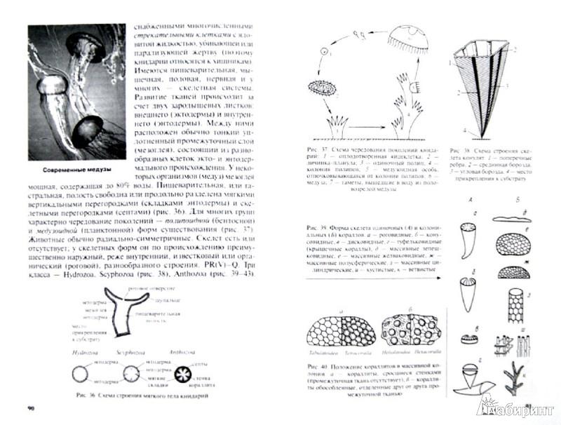 Иллюстрация 1 из 16 для Краткий курс палеонтологии беспозвоночных - Янин, Назарова | Лабиринт - книги. Источник: Лабиринт