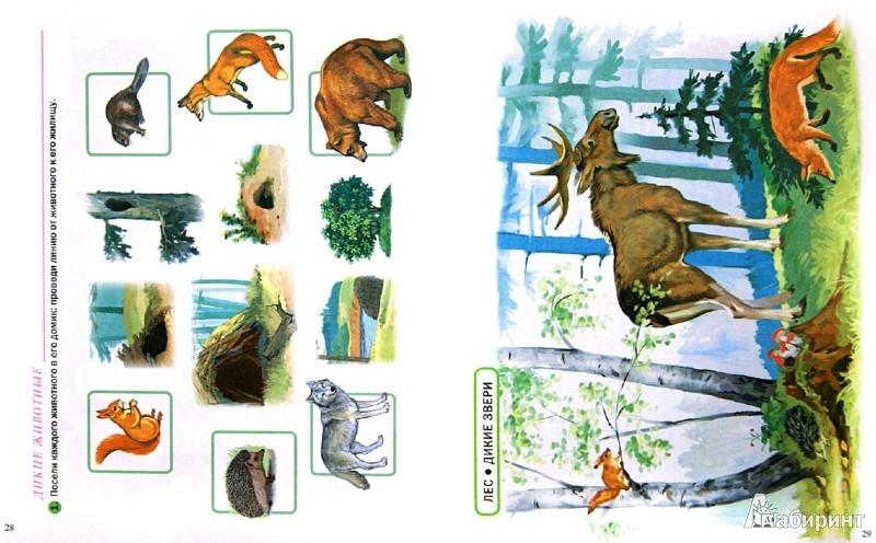 Иллюстрация 1 из 22 для Тематический словарь в картинках. Мир животных. Домашние и дикие животные средней полосы | Лабиринт - книги. Источник: Лабиринт