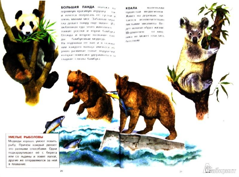 Иллюстрация 1 из 38 для Животные | Лабиринт - книги. Источник: Лабиринт