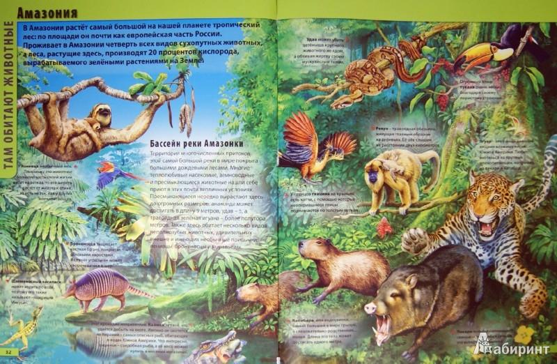 Иллюстрация 1 из 19 для Атлас животных - Мариуш Любка | Лабиринт - книги. Источник: Лабиринт