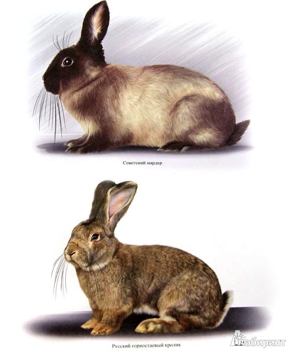 Иллюстрация 1 из 9 для Разведение кроликов и нутрий. Прибыльное дело на вашем участке - Сергей Малай | Лабиринт - книги. Источник: Лабиринт