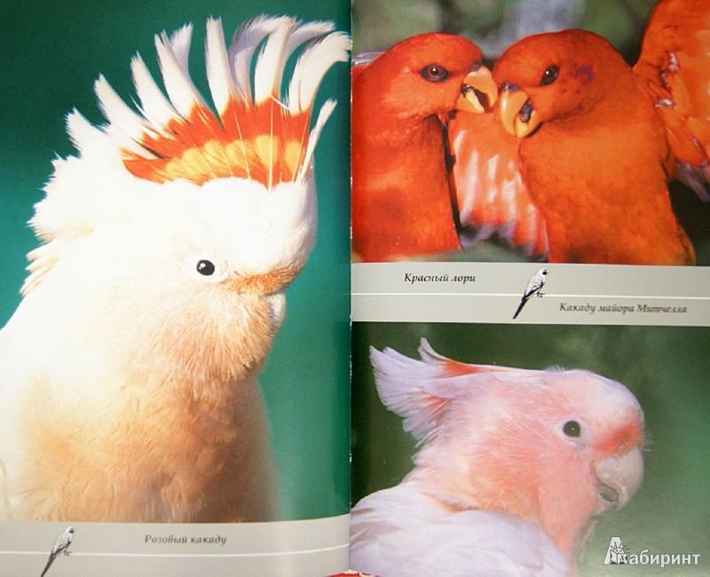 Иллюстрация 1 из 35 для Попугаи. Выбор, приручение, содержание, разведение - Валентина Казакова | Лабиринт - книги. Источник: Лабиринт