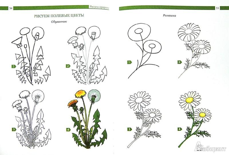 Иллюстрация 1 из 38 для Учебник рисования для начинающих - Наталья Терещенко | Лабиринт - книги. Источник: Лабиринт