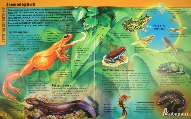 Иллюстрация 1 из 7 для Мир животных - Мариуш Любка | Лабиринт - книги. Источник: Лабиринт