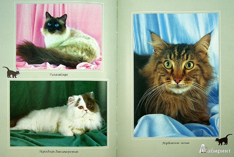 Иллюстрация 1 из 13 для Ваша кошка. Породы. Содержание. Питание - Дарья Дазидова | Лабиринт - книги. Источник: Лабиринт