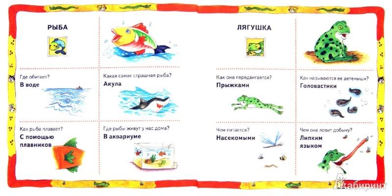 Иллюстрация 1 из 4 для Животные - Донателла Бергамино | Лабиринт - книги. Источник: Лабиринт