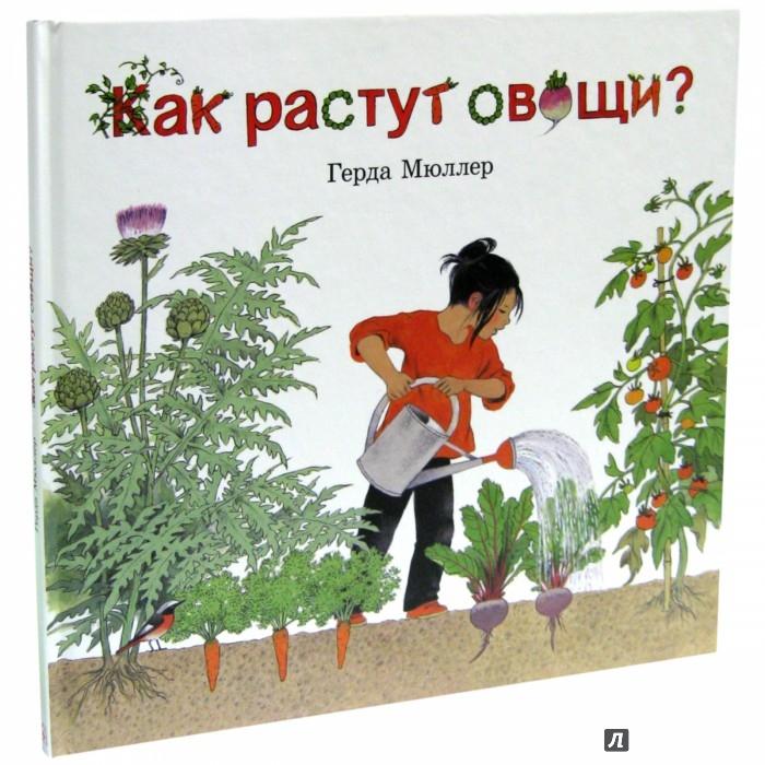 Иллюстрация 1 из 14 для Как растут овощи? - Герда Мюллер | Лабиринт - книги. Источник: Лабиринт