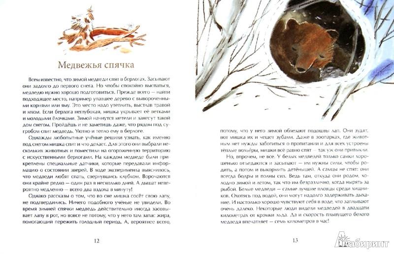 Иллюстрация 1 из 15 для Мишка. Самый русский зверь - Диана Лапшина | Лабиринт - книги. Источник: Лабиринт