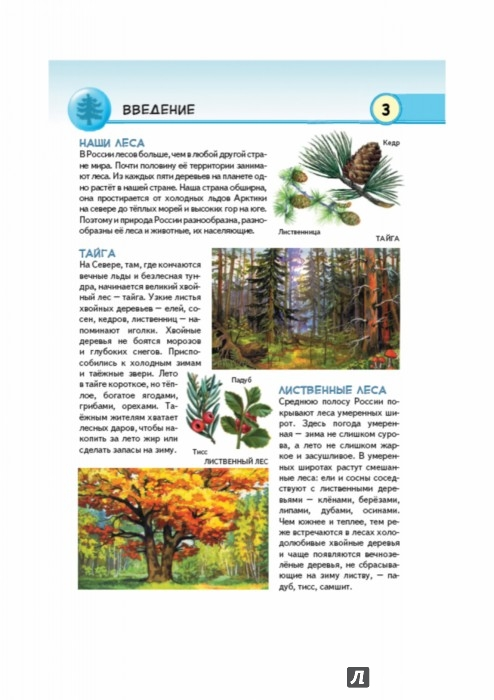Иллюстрация 1 из 39 для Животные наших лесов. Все лесные звери России - Юлия Школьник | Лабиринт - книги. Источник: Лабиринт