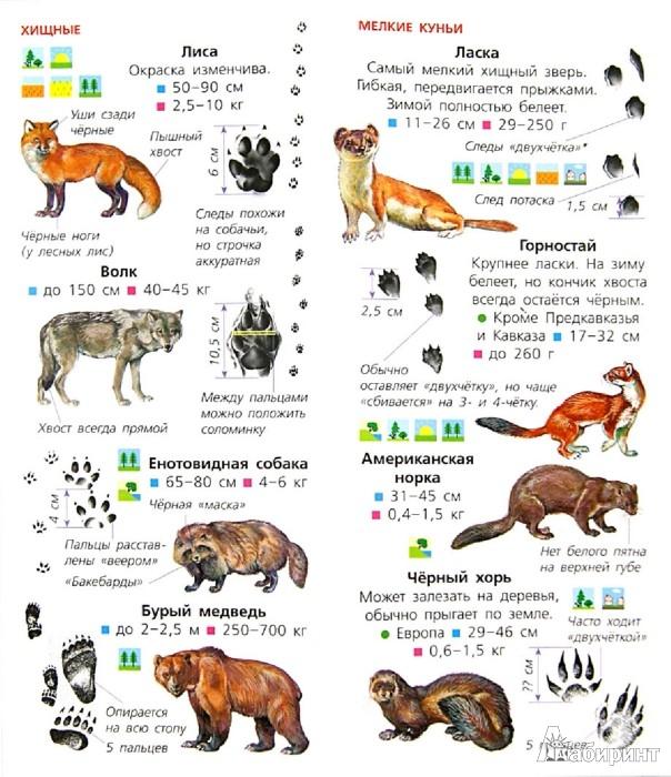 Иллюстрация 1 из 6 для Животные. Определитель для малышей | Лабиринт - книги. Источник: Лабиринт