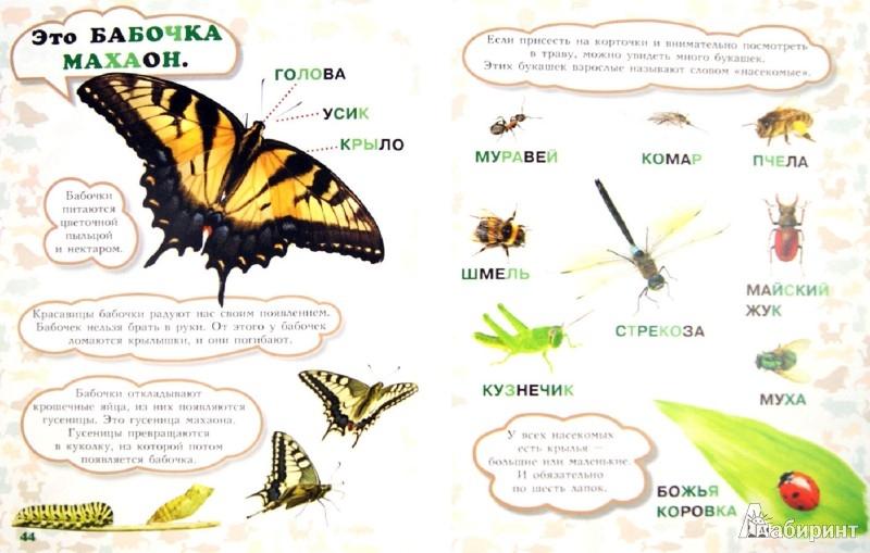 Иллюстрация 1 из 29 для Моя первая книга о животных - Лена Данилова | Лабиринт - книги. Источник: Лабиринт
