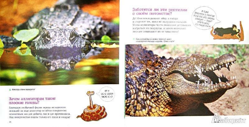 Иллюстрация 1 из 13 для Рептилии и амфибии. Удивительная энциклопедия животных | Лабиринт - книги. Источник: Лабиринт