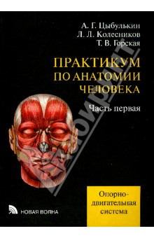 Практикум по анатомии человека. В 4-х частях. Часть 1. Опорно-двигательная система анна спектор большой иллюстрированный атлас анатомии человека