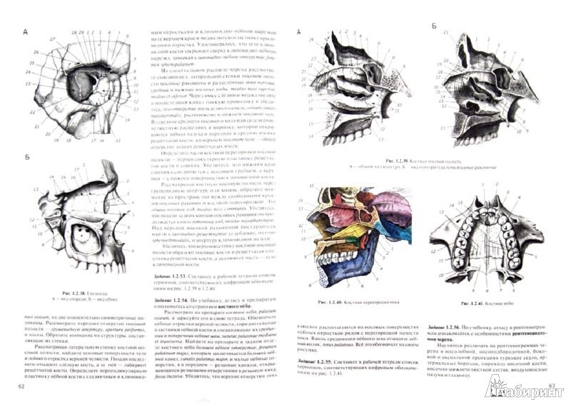 Иллюстрация 1 из 6 для Практикум по анатомии человека. В 4-х частях. Часть 1. Опорно-двигательная система - Цыбулькин, Горская, Колесников | Лабиринт - книги. Источник: Лабиринт