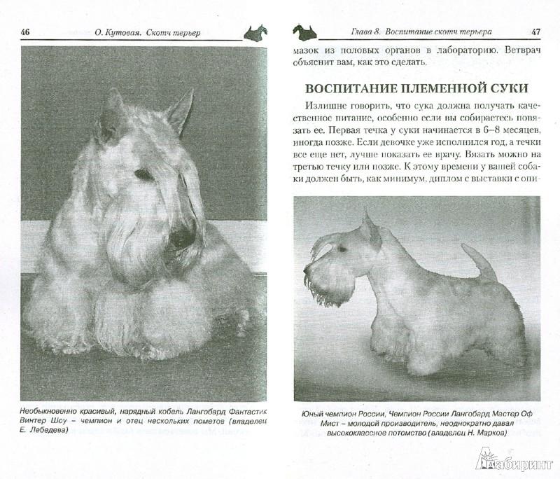 Иллюстрация 1 из 24 для Скотч терьер. Маленький джентльмен - Ольгп Кутовая | Лабиринт - книги. Источник: Лабиринт