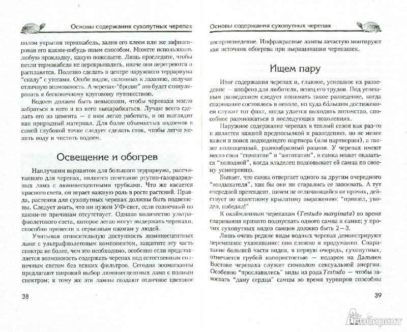 Иллюстрация 1 из 2 для Сухопутные черепахи. Содержание. Разведение. Кормление. Лечение заболеваний - Александр Чегодаев | Лабиринт - книги. Источник: Лабиринт