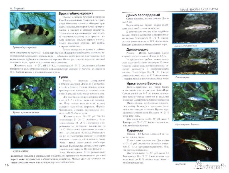 Иллюстрация 1 из 13 для Маленький аквариум - Александр Гуржий | Лабиринт - книги. Источник: Лабиринт