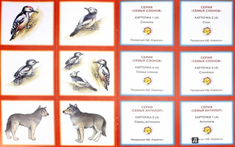 Иллюстрация 1 из 8 для Семья. Дикие животные - Сумнительный, Сумнительная | Лабиринт - книги. Источник: Лабиринт