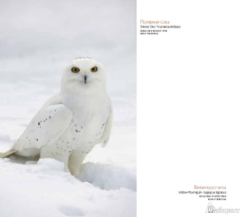 Иллюстрация 2 из 14 для Птицы России - Валерий Малеев | Лабиринт - книги. Источник: Лабиринт