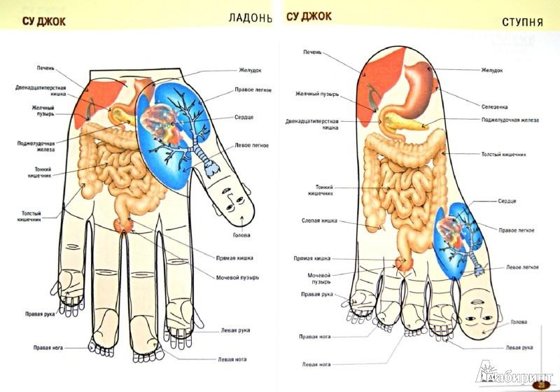 Иллюстрация 1 из 10 для Акупрессура. Иллюстрированный атлас | Лабиринт - книги. Источник: Лабиринт