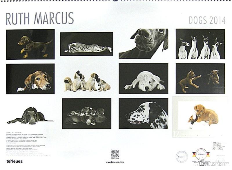 """Иллюстрация 1 из 2 для Календарь на 2014 год """"Собаки. Рут Маркус"""" (7-6283)   Лабиринт - сувениры. Источник: Лабиринт"""